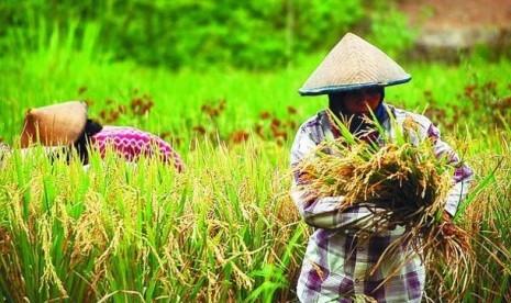lahan-pertanian-salah-satu-faktor-penopang-ketahanan-pangan-nasional-ilustrasi-_120429194138-340